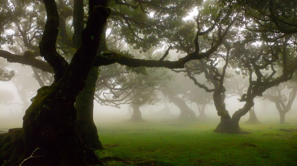 Nebelstimmung im Zauberwald: Christas Lieblingsplöatz auf Madeira!
